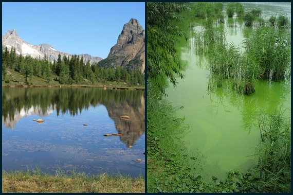 eutrophication / Hungabee Lake (left), in the Canadian Rockies, is a crystal clear blue lake. In contrast, Lake Taihu (right) in China is considered a highly eutrophic lake; note its bright green color