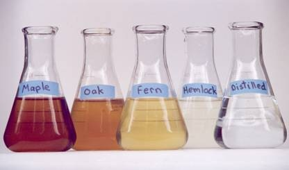 The beakers in this photo highlight how different sources of CDOM can vary widely in color. CDOM imparts a brown or yellowish hue to many lakes. (Image from Craig Williamson.)