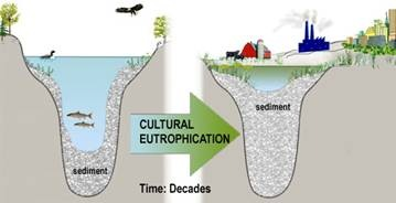 The process of eutrophication can be both natural and human-induced. Natural eutrophication, where the basin gradually fills in from nutrient and sediment inputs, occurs over long time periods – on the order of centuries. Human-induced, or cultural eutrophication, occurs on a much shorter time scale (decades) as a result of human disturbance and nutrient inputs.