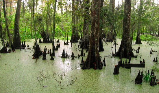 Louisiana Wetlands