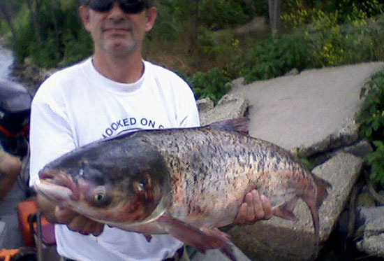 A fisheries biologist with the Illinois Department of Natural Resources holds a bighead carp caught beyond the electric barrier in Chicago's waterways. The fish was caught during routine fish sampling on June 22.