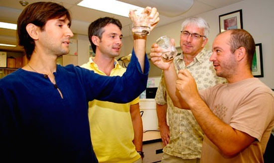 Researchers from the Great Lakes Institute at the University of Windsor examine samples of golden mussels.