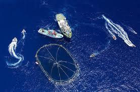 tuna-fishing-net