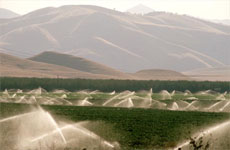 California's agriculture polluting its groundwater