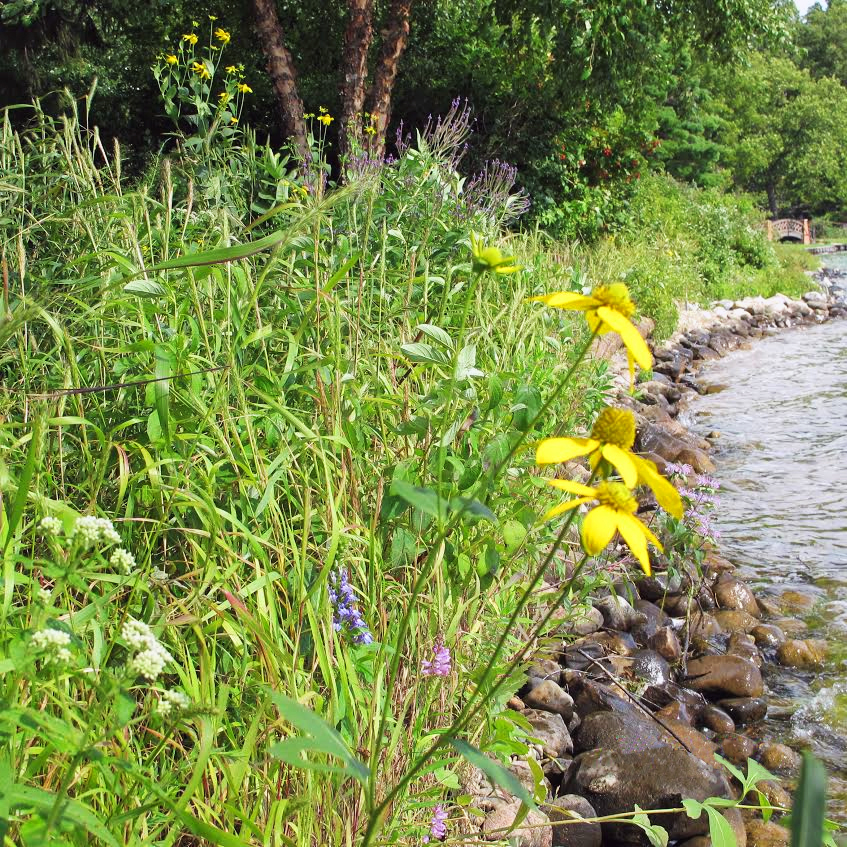 traditional soil lifts A section of shoreline in summer, study year 3