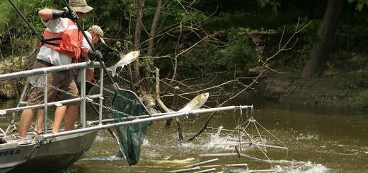 Asian carp in pennsylvania