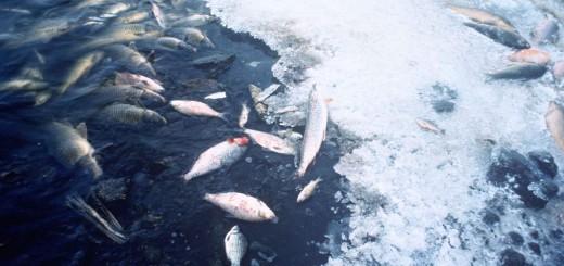 Fish_kill_pollution