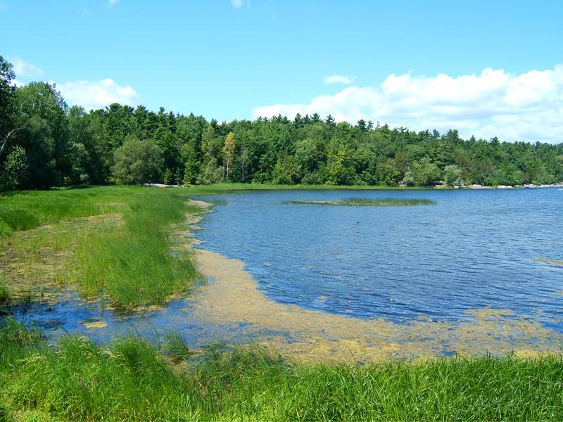 lake-champlain-marsh