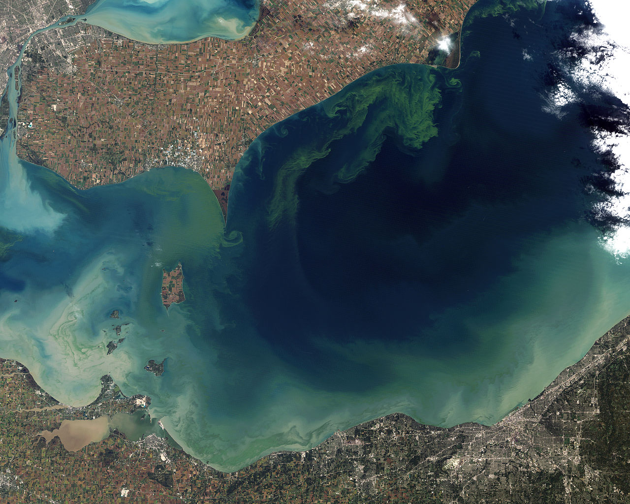Toxic-Algae-Bloom-in-Lake-Erie