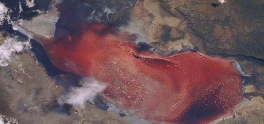 lake-natron-red-algae