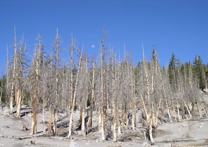 tree-death-horseshoe-lake-california