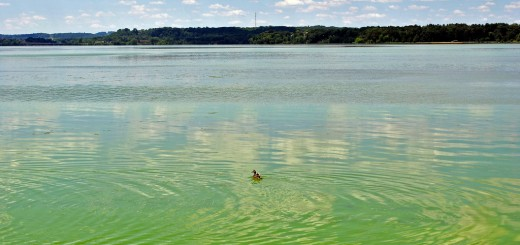lake menomin algal blooms