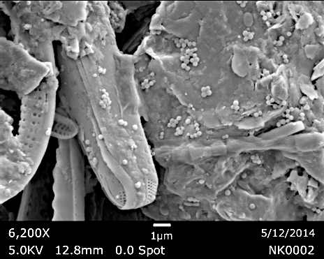 microplastics pollution mature biofilms on plastic debris