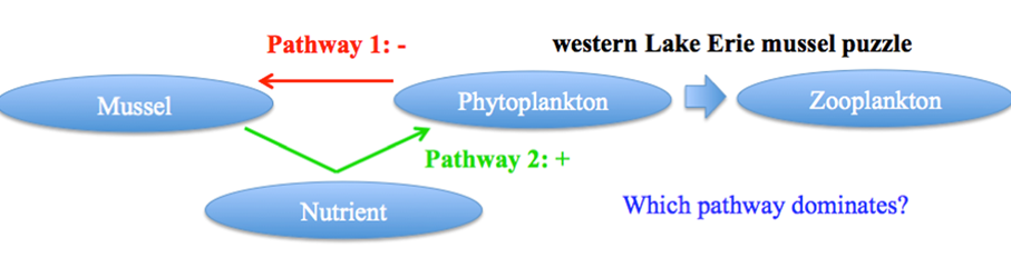 Figure 1. Conceptual diagram of mussel puzzle in western Lake Erie. Pathways 1 and 2 respectively indicate a negative and positive effect on plankton production.