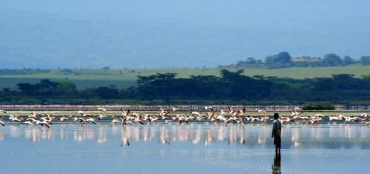 Lake Elmenteita. (Credit: Flickr User Xiaojun Deng via Creative Commons 2.0)