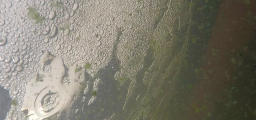 u-mich-nitrogen-lake-erie-algae-toxicity-featured