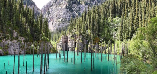 lake kaindy sunken forest